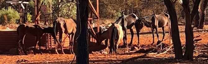 2627 starving horses 3 OK