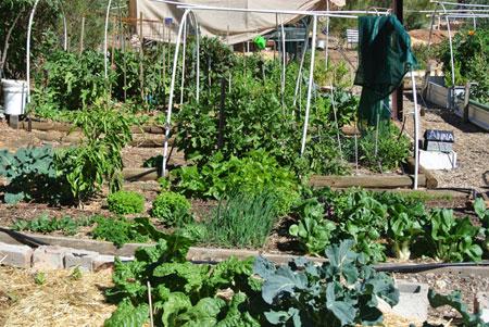 p2237-parks-cty-garden-sm