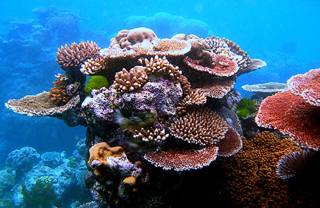 p2267-Great-Barrier-Reef