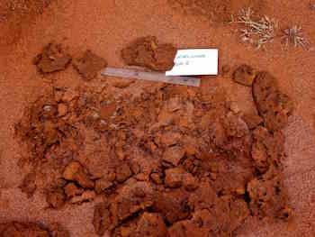 p2361 Termite excavation 2