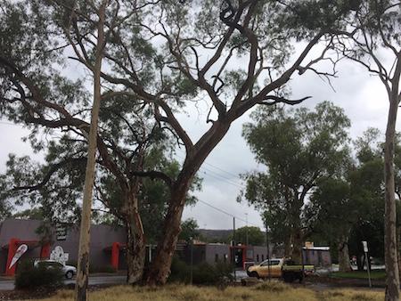 p2379-melanka-tree-south-ok