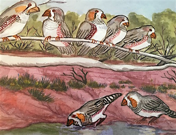 p2450 Therese Ryder finches 350