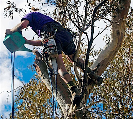p2468 Trees Walsh arborist 2 430